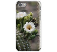 Magnificant Bloom of the Saguaro  iPhone Case/Skin