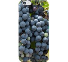 Harvest Time at Coronado Vineyards iPhone Case/Skin