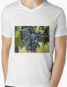 Harvest Time at Coronado Vineyards Mens V-Neck T-Shirt