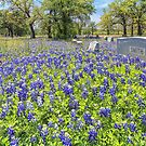 Broad Branch Cemetery Blue by Owed To Nature