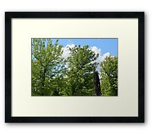 Green trees in the park. Framed Print