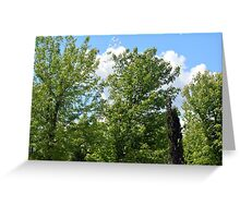 Green trees in the park. Greeting Card
