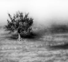 Tree in Early Morning Mist by Jill Fisher