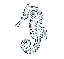 Seahorse sea horse nature ocean aquatic underwater vector. Hand drawn marine engraving illustration on white background Photographic Print