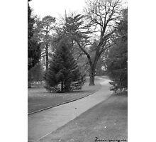 Trees in Launceston Photographic Print