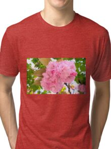 Pink Double Cherry Blossoms Tri-blend T-Shirt