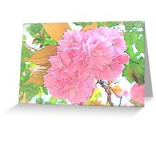Pink Double Cherry Blossoms ( Pencil Drawing ) Greeting Card