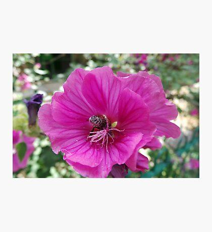 Knee Deep in Pollen Photographic Print