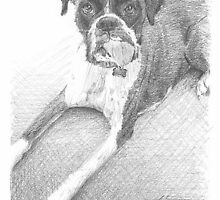 boxer dog w/tongue out drawing by Mike Theuer