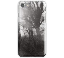 Sun Shining Through Trees iPhone Case/Skin