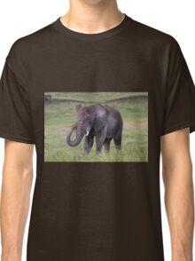 African Bush Elephant (Loxodonta africana) Classic T-Shirt