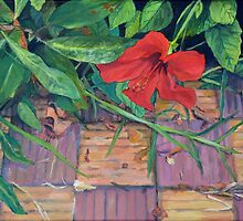 Sidi Bouzid Hibiscus by Amanda Burns-Elhassouni