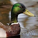 Greenhead by Debbie Oppermann