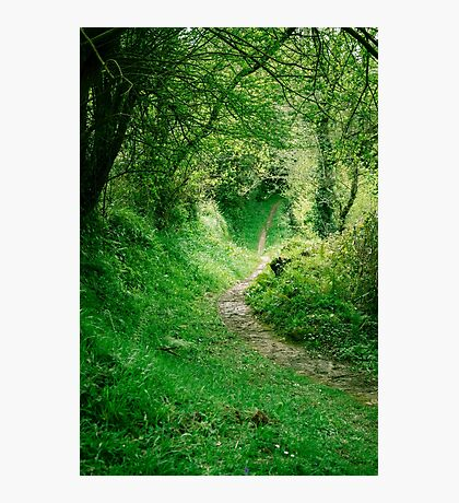 Footpath Photographic Print
