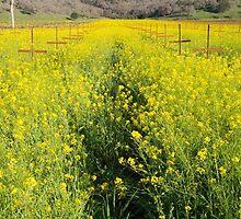 Mustard Flower Power by Mitchel Whitehead