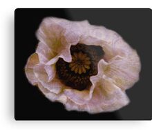 Flower pillows & Art- Consolation- A poppy for Shelley Metal Print