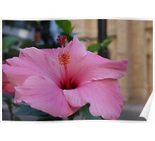 Pink Hibiscus If you like, please purchase, try a cell phone cover thanks Poster