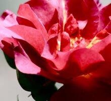 Cinco De Mayo Rose Sticker