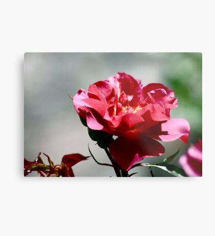 Cinco De Mayo Rose Metal Print