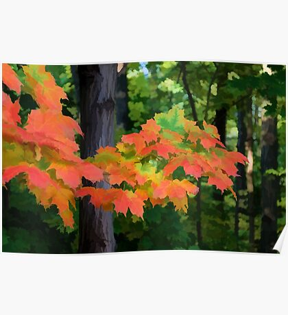 Impressions of Forests - The First Red Maple Leaves Poster