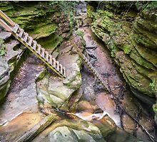 Trail Ladders in Bear Hollow by Kenneth Keifer