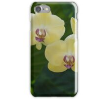 Pale Yellow Orchids in Lush Jungle Green iPhone Case/Skin