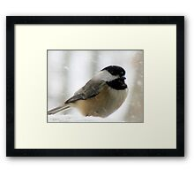 Chickadee In Snowstorm Framed Print
