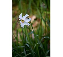 The Laughing Daffodil  Photographic Print