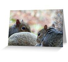 Squirrel Hard Rock Café Greeting Card