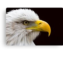 Portrait of a Bald Eagle Canvas Print
