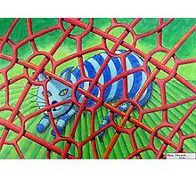 424 - PROTECTED - DAVE EDWARDS - COLOURED PENCILS - 2016 Photographic Print