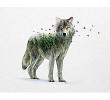 Wild I Shall Stay | Wolf Photographic Print