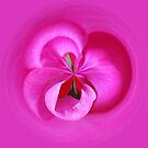 Pink Petals Abstract by Cynthia48