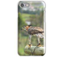 Ornate Hawk Eagle on a Perch iPhone Case/Skin