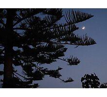 Moonlight Pine Photographic Print