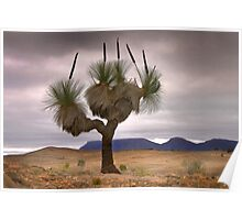 The Grass Tree Poster