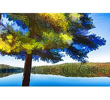 Sun and Shade Pine Tree On the Lake - Colorful Autumn Impressions Photographic Print