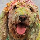HOLI Color Festival, Poodle Participant!  by Heather Friedman