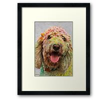 HOLI Color Festival, Poodle Participant!  Framed Print