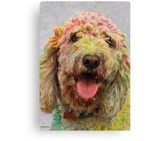 HOLI Color Festival, Poodle Participant!  Canvas Print