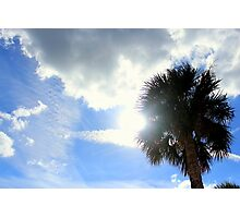 The Sun and the Palm Tree Photographic Print