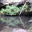 Perfect Reflection! Fern Pool, Cania Gorge, hinterland Que. by Rita Blom