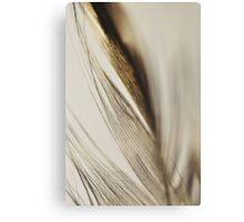 Close up of feather Canvas Print
