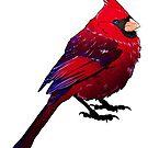 Cardinal by bendrawslife
