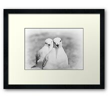 Black and White Seagull Framed Print