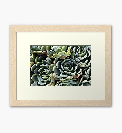 World Of The Succulent Framed Print
