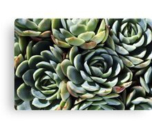 World Of The Succulent Canvas Print
