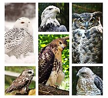 birds of prey collection Photographic Print