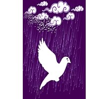 Crying Doves Photographic Print