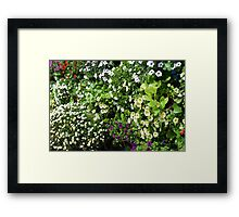 Colorful, many small flowers in the garden. Framed Print